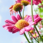 Astenia primaveral, el bajón que llega con el buen tiempo